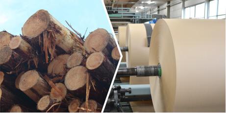 収穫期の主伐材と間伐材の違い