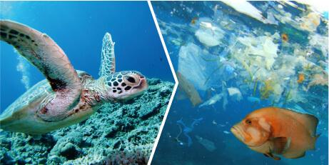 海洋汚染から地球を守れ